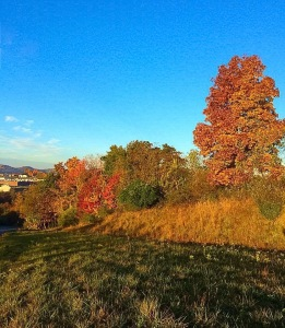Vibrant fall colors in WV.