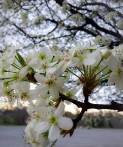 Springtime in WV